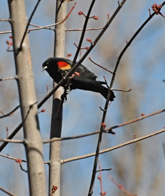 how to keep blackbirds away from your birdfeed