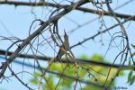 12Aug2013_1_Hummingbird_In-Tree