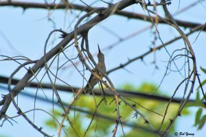 12Aug2013_1_Hummingbird_In-Tree