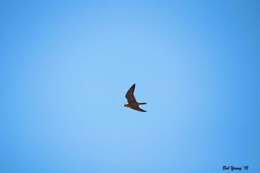 13Mar2015_1d_Boise-Falcons_Hi-Flight_Good