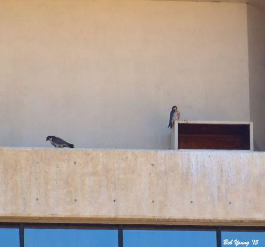 18Mar2015_1c_Boise-Falcons_Pair-At-Box