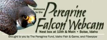 PeregrineWebCam_Logo_Boise