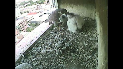Feeding time.